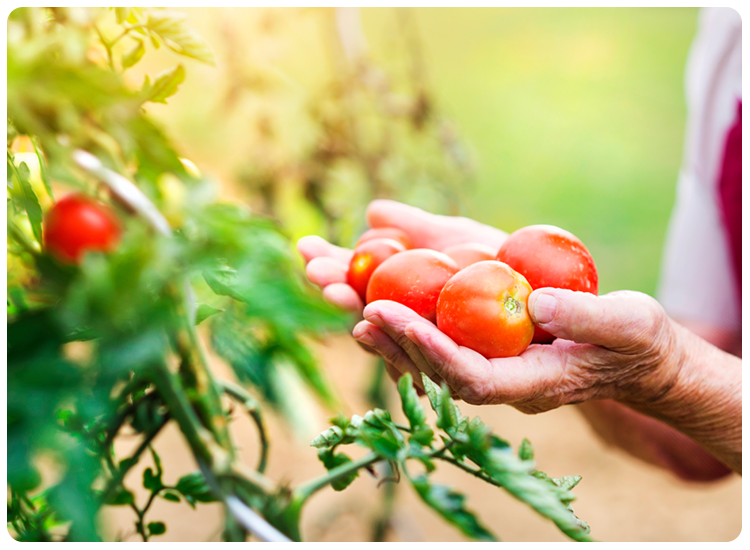 For Many Gardeners, The Fruits Of Their Labor Are Just That: Fruits (or  Vegetables). But Edible Gardening Is Different From Planting Shrubs, Trees,  ...