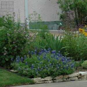Revive your Summer Garden