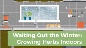 Waiting Out the Winter: Growing Herbs Indoors
