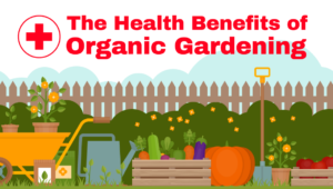 Infographic: The Health Benefits of Organic Gardening