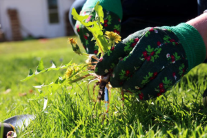 a few easy ways to keep your garden weed free - Garden Mainenance