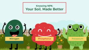 Knowing NPK: Your Soil, Made Better