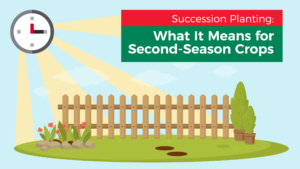 Succession Planting: What It Means for Second-Season Crops