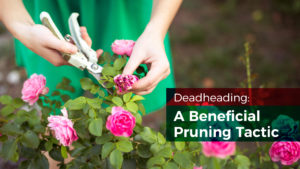 Deadheading: A Beneficial Pruning Tactic