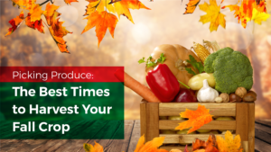 Picking Produce: The Best Times to Harvest Your Fall Crop