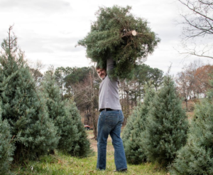 Keeping Your Christmas Tree Happy and Healthy This Holiday Season