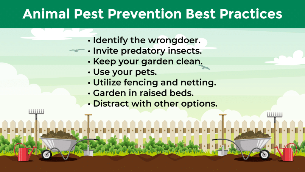 A list of the best practices to follow to prevent animal pests in your spring garden