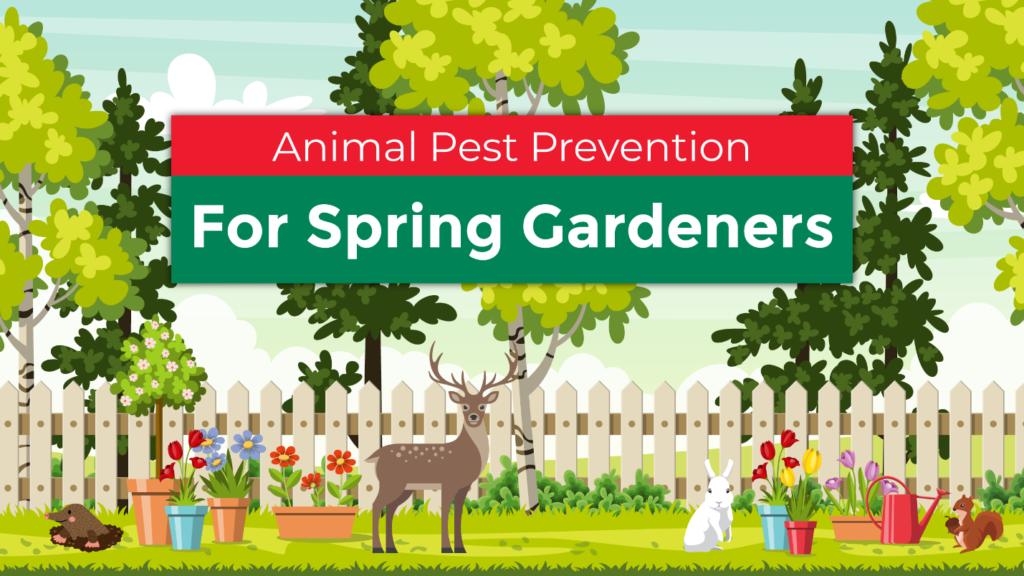 Animal Pest Prevention for Spring Gardeners