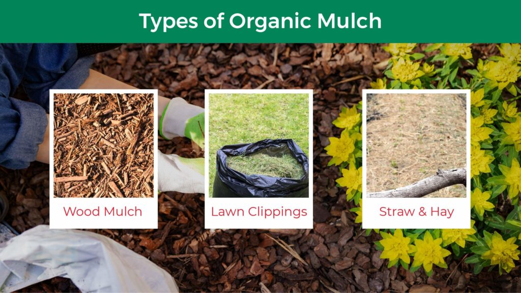 Three types of organic mulch: wood mulch, lawn clippings, and straw and hay