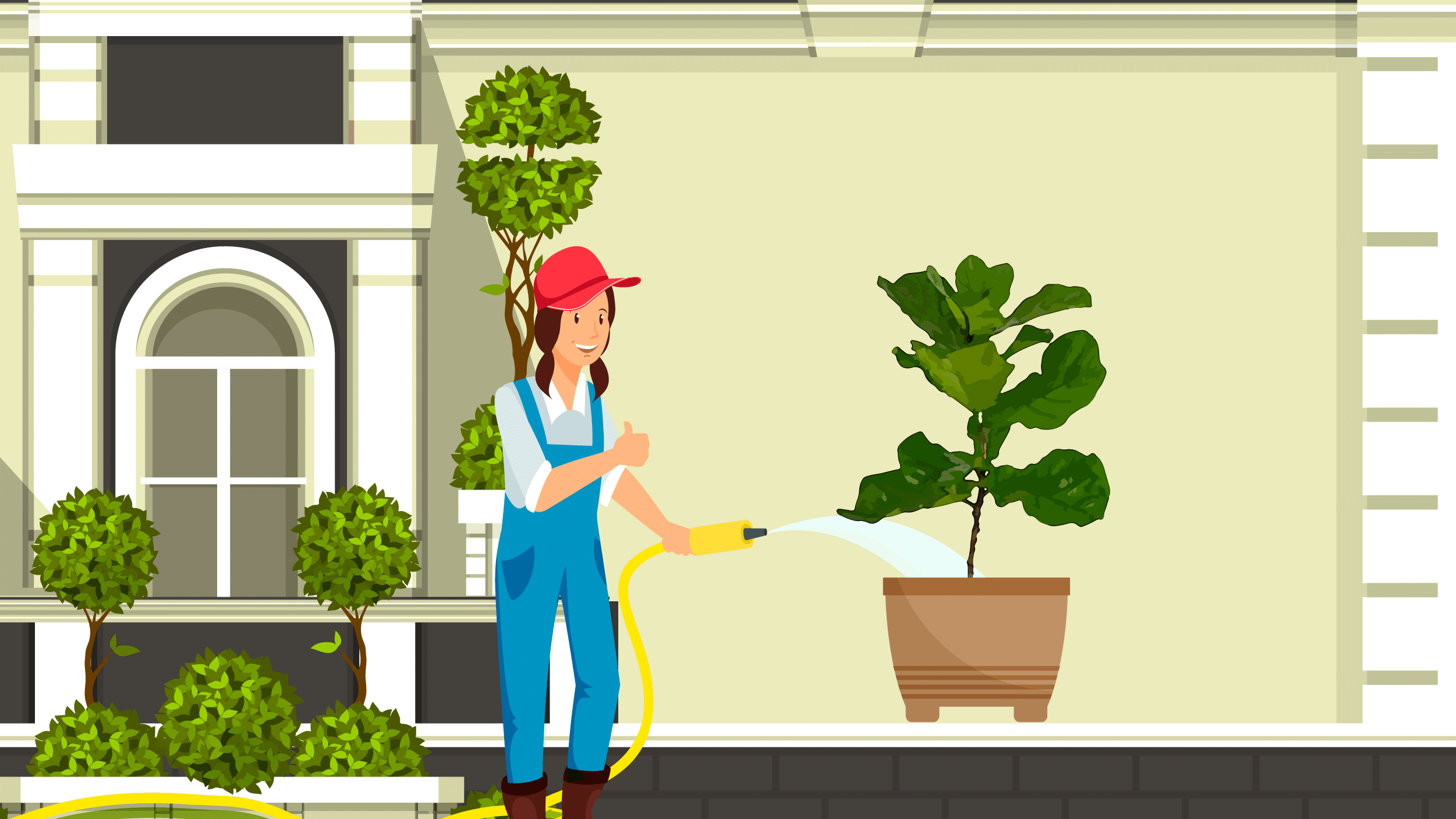 Illustration of a young girl watering her newly potted fiddle-leaf fig outdoors.