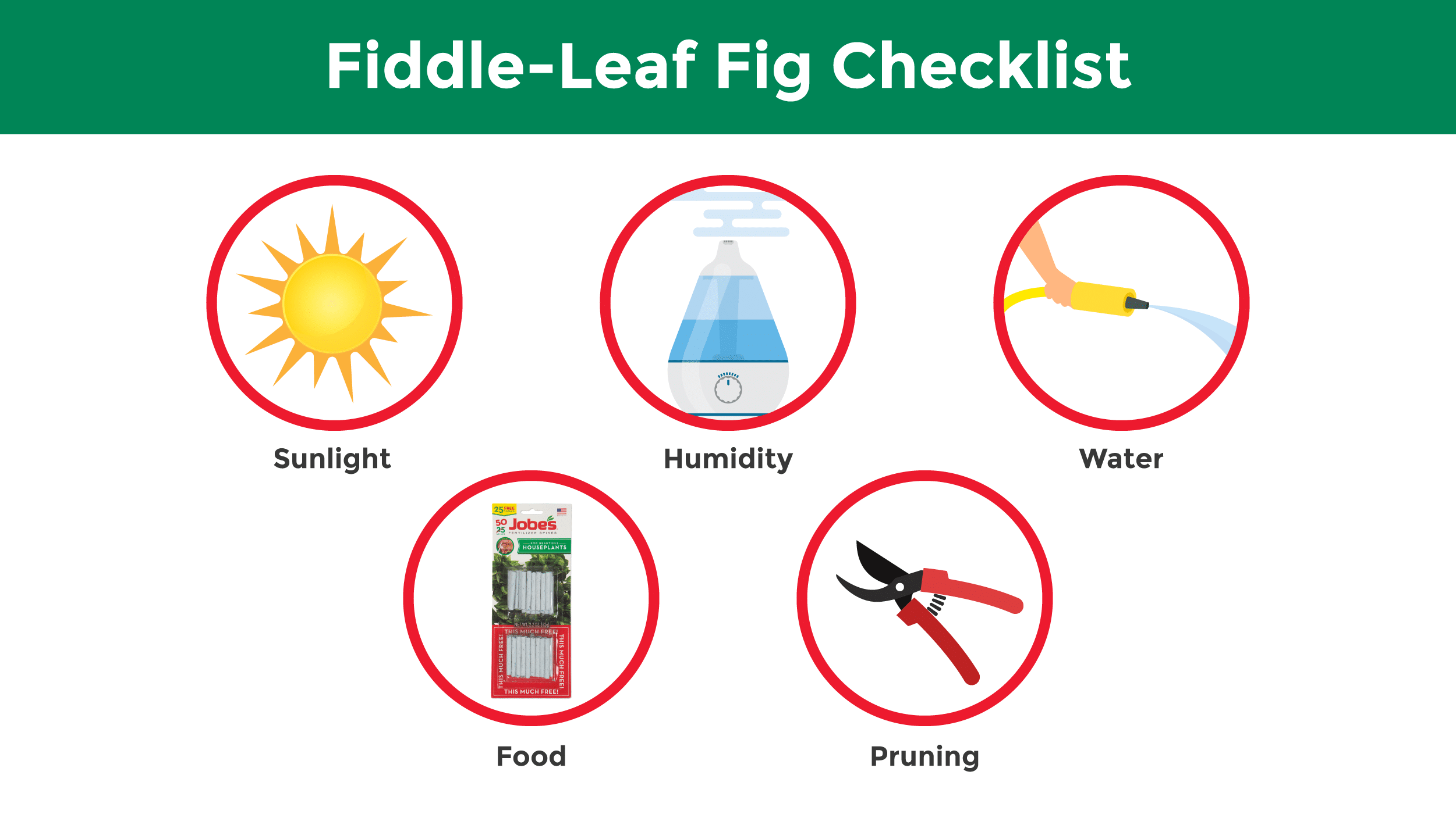 Illustration featuring a checklist of the best steps for a flourishing fiddle-leaf fig.