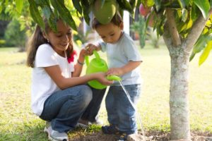 Tree Care Methods and Necessities for Beginners